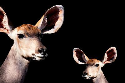 Safari Profile Collection - Antelope and Baby Black Edition-Philippe Hugonnard-Photographic Print