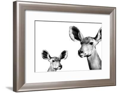 Safari Profile Collection - Antelope and Baby White Edition II-Philippe Hugonnard-Framed Photographic Print