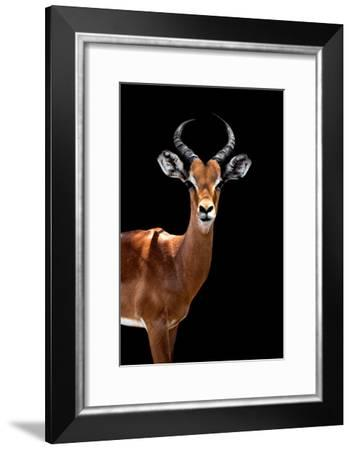 Safari Profile Collection - Antelope Black Edition II-Philippe Hugonnard-Framed Photographic Print