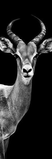 Safari Profile Collection - Antelope Black Edition III-Philippe Hugonnard-Photographic Print