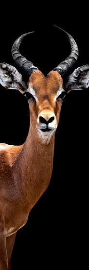 Safari Profile Collection - Antelope Black Edition IV-Philippe Hugonnard-Photographic Print