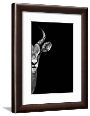 Safari Profile Collection - Antelope Face Black Edition-Philippe Hugonnard-Framed Photographic Print