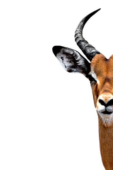 Safari Profile Collection - Antelope Face White Edition II-Philippe Hugonnard-Photographic Print