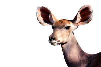 https://imgc.artprintimages.com/img/print/safari-profile-collection-antelope-impala-portrait-white-edition_u-l-q120me40.jpg?p=0