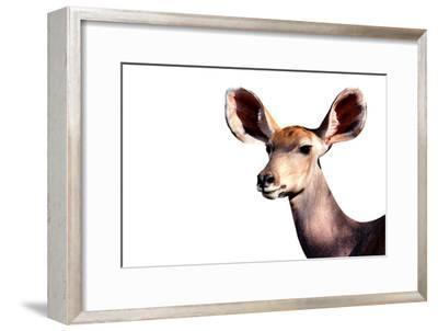 Safari Profile Collection - Antelope Impala Portrait White Edition-Philippe Hugonnard-Framed Photographic Print