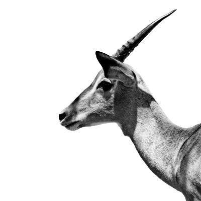 Safari Profile Collection - Antelope Impala White Edition III-Philippe Hugonnard-Photographic Print