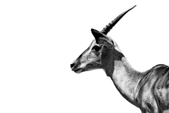 Safari Profile Collection - Antelope Impala White Edition-Philippe Hugonnard-Photographic Print