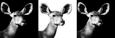 Safari Profile Collection - Antelopes Impalas Portraits IV-Philippe Hugonnard-Photographic Print