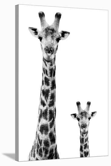 Safari Profile Collection - Giraffe and Baby White Edition II-Philippe Hugonnard-Stretched Canvas Print
