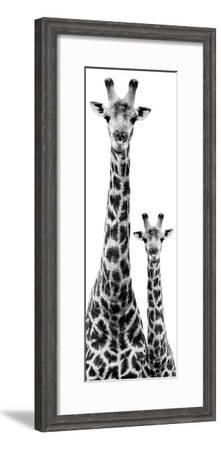Safari Profile Collection - Giraffe and Baby White Edition IV-Philippe Hugonnard-Framed Premium Photographic Print