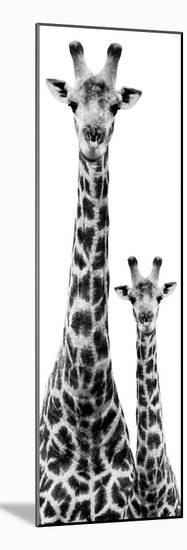 Safari Profile Collection - Giraffe and Baby White Edition IV-Philippe Hugonnard-Mounted Photographic Print