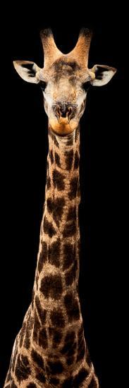Safari Profile Collection - Giraffe Black Edition XI-Philippe Hugonnard-Photographic Print