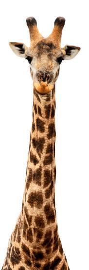 Safari Profile Collection - Giraffe White Edition IX-Philippe Hugonnard-Photographic Print