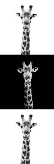 Safari Profile Collection - Giraffes IV-Philippe Hugonnard-Photographic Print