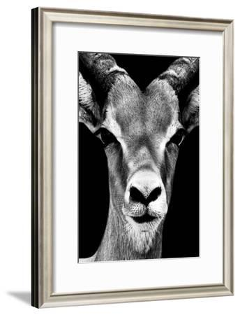 Safari Profile Collection - Portrait of Antelope Black Edition-Philippe Hugonnard-Framed Photographic Print