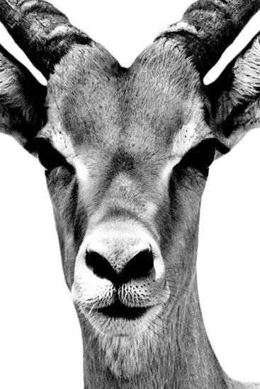 Safari Profile Collection - Portrait of Antelope White Edition-Philippe Hugonnard-Photographic Print