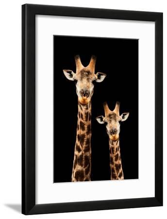 Safari Profile Collection - Portrait of Giraffe and Baby Black Edition III-Philippe Hugonnard-Framed Photographic Print