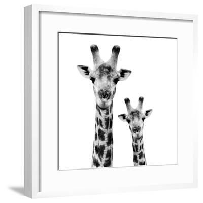Giraffe Canvas Black White Animal Kingdom Panorama Wall Art Picture Home Decor