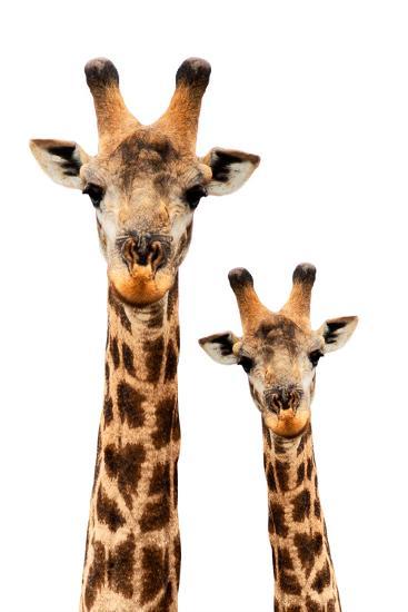 Safari Profile Collection - Portrait of Giraffe and Baby White Edition III-Philippe Hugonnard-Photographic Print