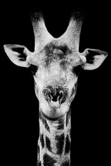 Safari Profile Collection - Portrait of Giraffe Black Edition V-Philippe Hugonnard-Photographic Print
