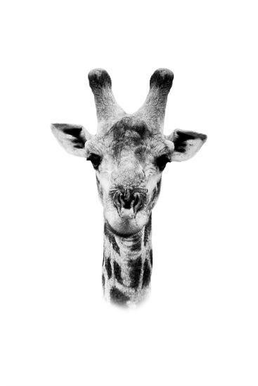 Safari Profile Collection - Portrait of Giraffe White Edition II-Philippe Hugonnard-Photographic Print