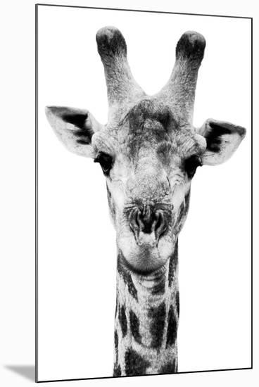 Safari Profile Collection - Portrait of Giraffe White Edition V-Philippe Hugonnard-Mounted Photographic Print