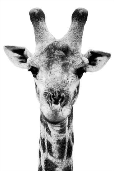 Safari Profile Collection - Portrait of Giraffe White Edition V-Philippe Hugonnard-Photographic Print