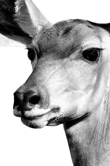 Safari Profile Collection - Portrait of Impala White Edition-Philippe Hugonnard-Photographic Print
