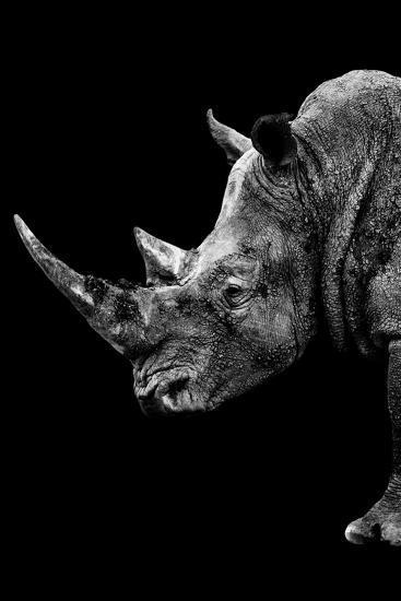 Safari Profile Collection - Rhino Black Edition IV-Philippe Hugonnard-Photographic Print