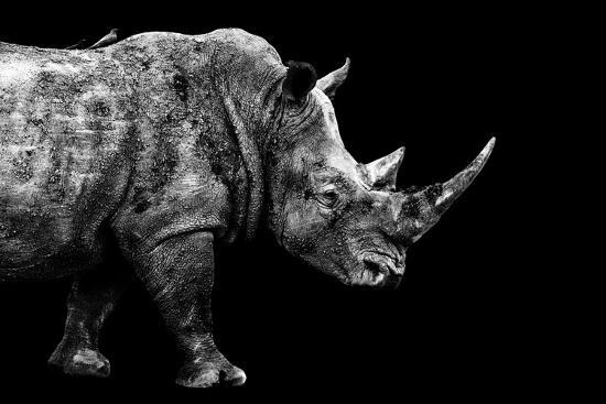 Safari Profile Collection - Rhino Black Edition-Philippe Hugonnard-Photographic Print