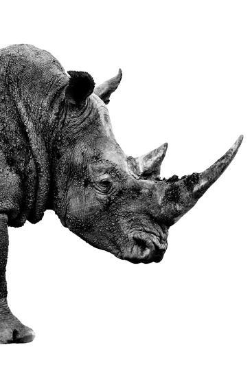 Safari Profile Collection - Rhino White Edition IV-Philippe Hugonnard-Photographic Print