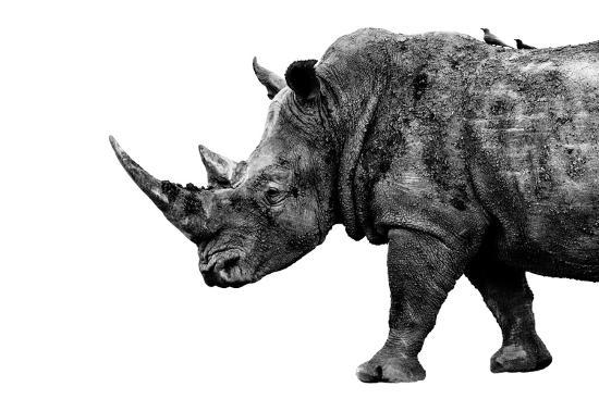 Safari Profile Collection - Rhino White Edition-Philippe Hugonnard-Photographic Print