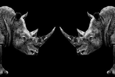 Safari Profile Collection - Rhinos Face to Face Black Edition-Philippe Hugonnard-Photographic Print