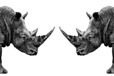 Safari Profile Collection - Rhinos Face to Face White Edition-Philippe Hugonnard-Photographic Print
