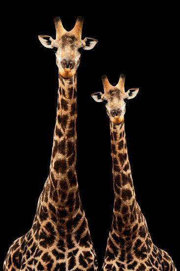 Safari Profile Collection - Two Giraffes Black Edition-Philippe Hugonnard-Photographic Print
