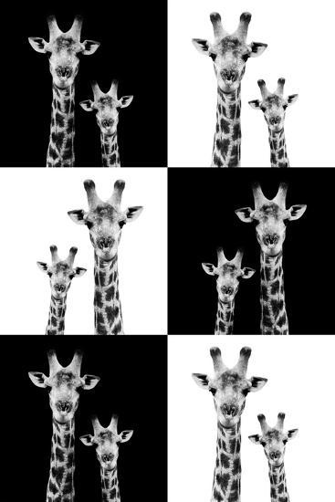 Safari Profile Collection - Two Giraffes-Philippe Hugonnard-Photographic Print