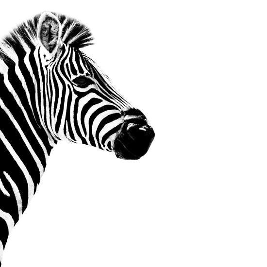 Safari Profile Collection - Zebra Portrait White Edition III-Philippe Hugonnard-Photographic Print