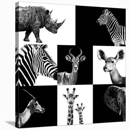 Safari Profile Collection-Philippe Hugonnard-Stretched Canvas Print