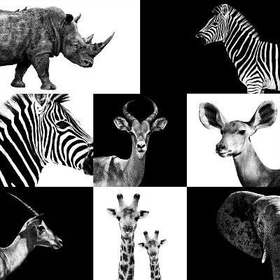 Safari Profile Collection-Philippe Hugonnard-Photographic Print
