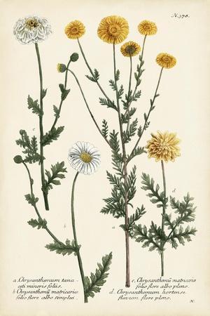 https://imgc.artprintimages.com/img/print/saffron-garden-iv_u-l-pwc94c0.jpg?p=0