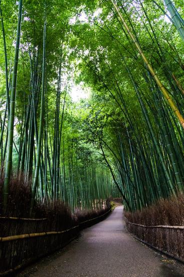 Sagano Bamboo Forest-Shenghung Lin Photos-Photographic Print