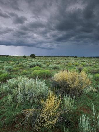 https://imgc.artprintimages.com/img/print/sage-and-storm-clouds-near-gallup_u-l-p4tvkn0.jpg?p=0