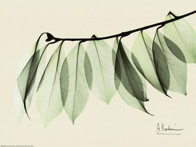 https://imgc.artprintimages.com/img/print/sage-eucalyptus-leaves-i_u-l-f3pou00.jpg?p=0