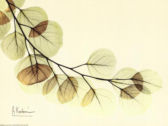 Sage Eucalyptus Leaves II-Albert Koetsier-Art Print