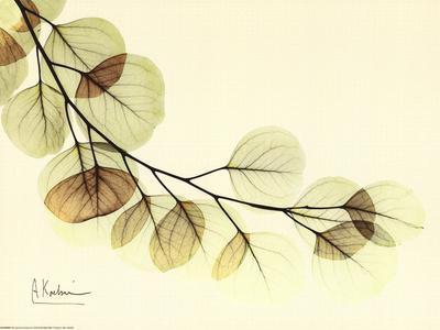 https://imgc.artprintimages.com/img/print/sage-eucalyptus-leaves-ii_u-l-f3pou10.jpg?p=0