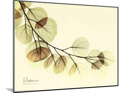 Sage Eucalyptus Leaves II-Albert Koetsier-Mounted Print