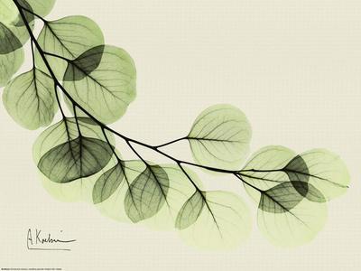 https://imgc.artprintimages.com/img/print/sage-eucalyptus-leaves-ii_u-l-f8unih0.jpg?p=0