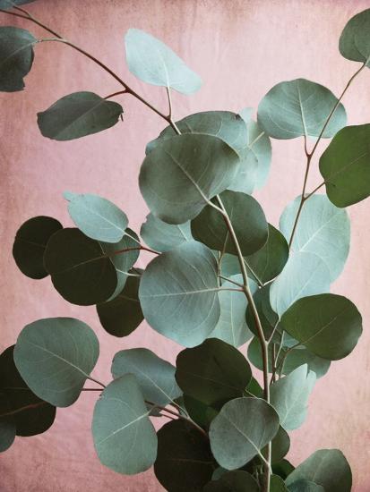 Sage Eucalyptus No. 1-Lupen Grainne-Photographic Print