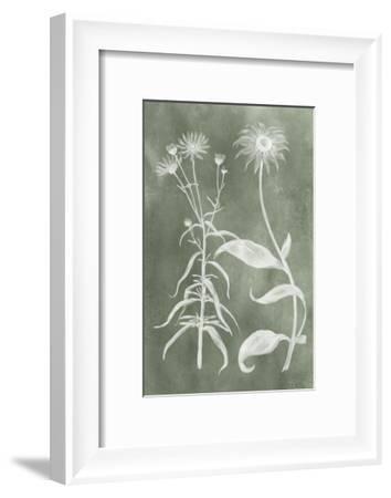 Sage Impressions IV-Vision Studio-Framed Art Print