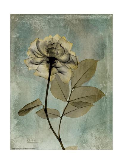 Sage Opus Rose-Albert Koetsier-Premium Giclee Print